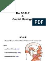 1 the SCALP Meninges E-learning