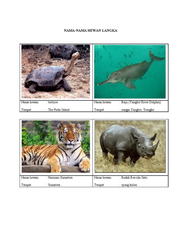 Nama hewan