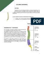 06 - Columna Vertebral