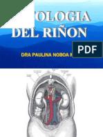 PATOLOGIA DEL RIÑON 1