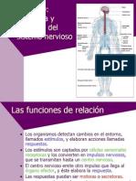 fisiologia_sistema_nervioso