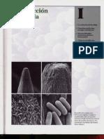 P1-C01 - La evolución de la célula