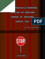 articulacion gral 2012