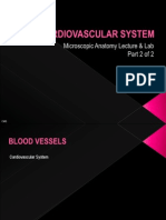 MicroAnat_CardiovascularSystem_BloodVessels