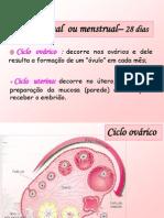 Afonso 9CN Ciclos Sexuais Femininos Fecundacao