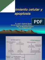 27Envejecimiento Celular y Apoptosis2010[1].