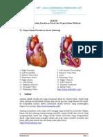 Organ Sistem Peredaran Darah Dan Organ Ekskresi