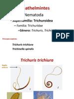 Trichuris