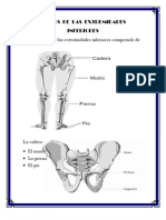 Huesos de La Pierna 1