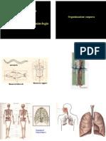 Anatomia (anatomia generale)