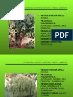 Flora Serranias y Valles Interandinos