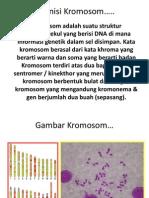 Definisi Kromosom