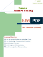 Bone Fracture Healing