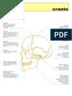 cranio-reperi