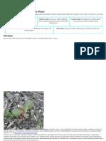 Major Groupings of Wild Edible Plants