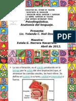 Anatomía del lenguaje. Exposición de psicolingüística.