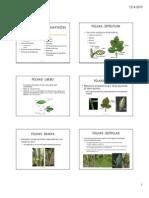 Folhas - Estruturas e adapta+º+Áes