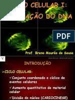 Aula 12_Ciclo Celular I - Replicacao Do DNA