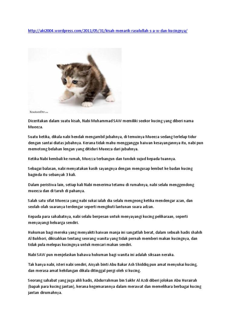 Kucing Dan Rasulullah