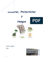 p378Monerasprotoctistsayhongos