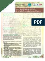 muestrasenfermedadesplantas