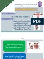 Sistema Urogenital Final