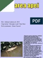 poluareaapei-110319065953-phpapp01
