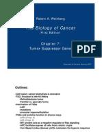 Biology of Cancer_971021.PDF