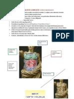 -La Corazza Dell'Augusto Ioricato- Approfondimento