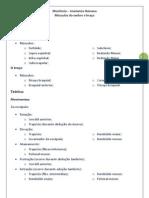 Revisão Anatomia - Monitoria