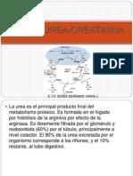 Ciclo Urea Creatinina