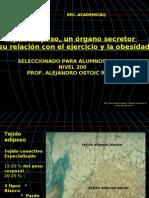 Tejido Adiposo Ppt 2012 Actualizado