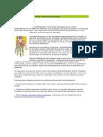 Prevención de lesiones osteomusculares