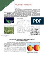 Penyakit Tumbuhan Akibat Virus