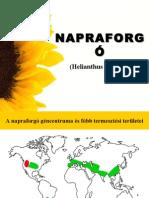 NAPRAFORGÓ