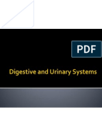 digestive and urinary systems powerpoint quiz