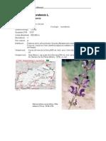 parcsnaturals/Home/Serra de Montsant/Coneix-nos/Centre de documentacio/Fons documental/Biblioteca digital/Flora i vegetacio/Flora Vascular de la Serra de Montsant/43_102853.pdf