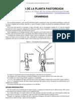 04-Fisiologia de La Planta a