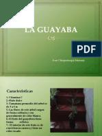 La Guayaba Ecologia