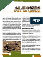 camaleones endemicos de méxico