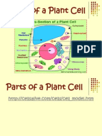 Parts of a Cell 2008