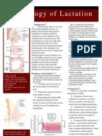 U9W6 - Physiology of Lactation