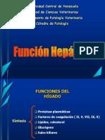 clase_de_hepatico