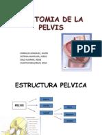 Anatomia Pelvis 1