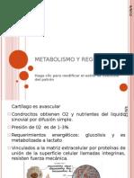 METABOLISMO Y REGULACION