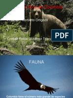Fauna y Flora de Colombia
