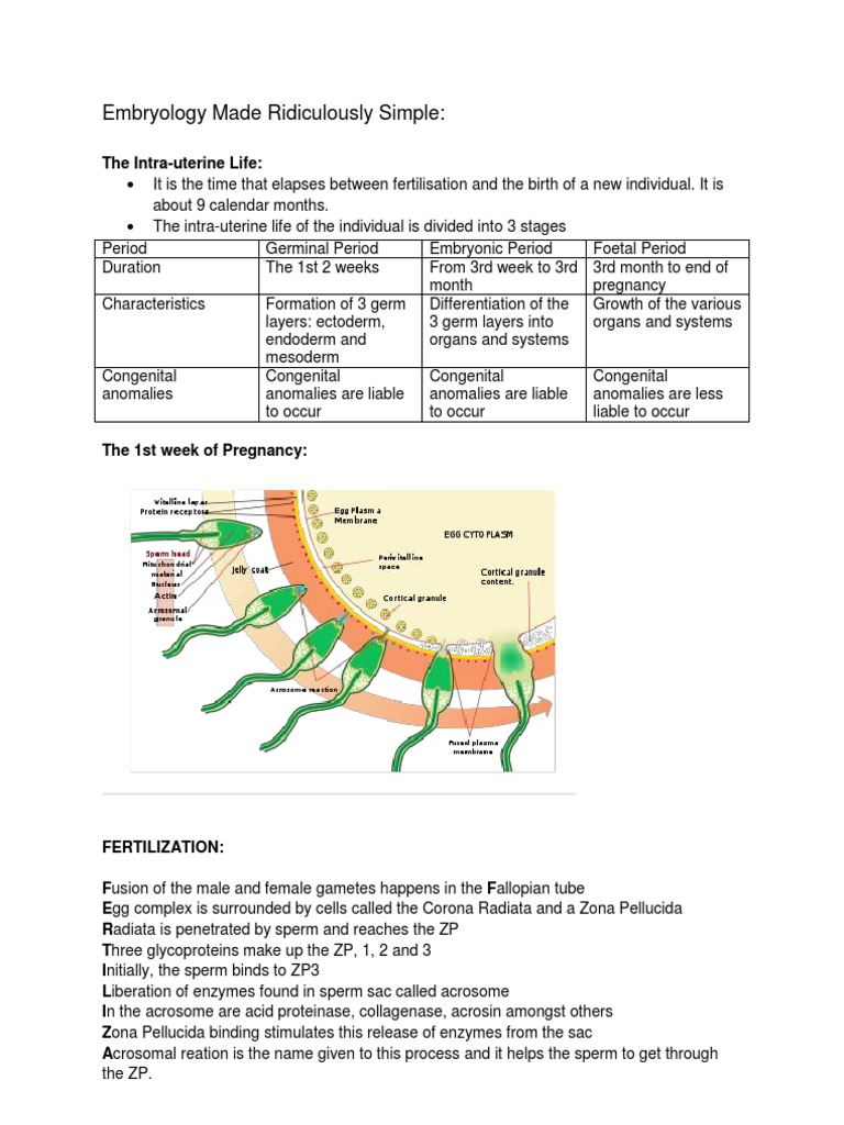 Embryology Made Ridiculously Simple Handout | Fertilisation ...