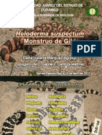 Heloderma suspectum - Monstruo de Gila