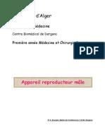 appareil reproducteur mâle
