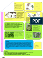 Lamina Adaptacion Biologia